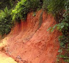 真っ赤な土がプーアール茶の重合カテキンを育てます