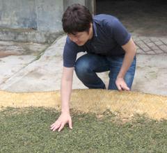 日干しで茶葉を乾燥させます